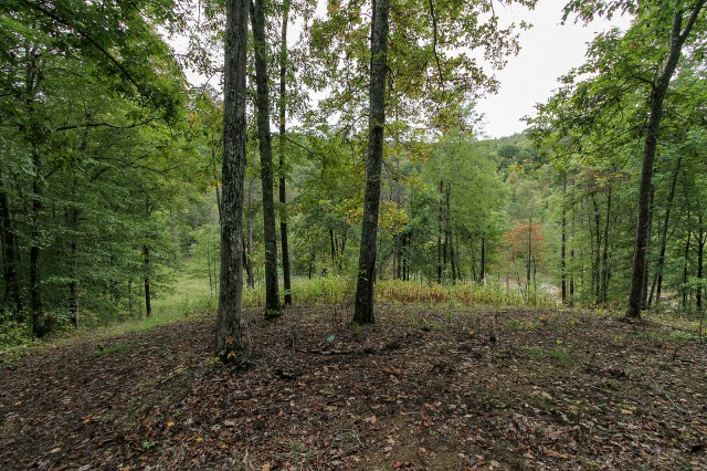 SOLD – Sale 5 of 6: Approx. 20.75 Acres in Claiborne County Subdivided Into 3 Tracts