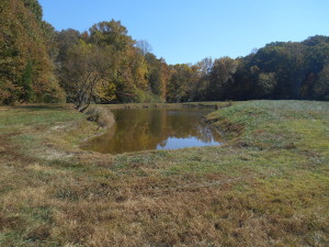 Pond on the Property