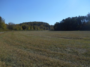 Another View of Open Pasture Land