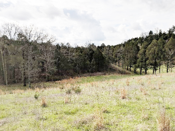 REAL ESTATE AUCTION: 79.6 Acres of Pristine Land in Hamblen County